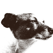 Jack Russell Terrier Profile in Pen