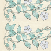 Vinca-drawing-rotated-BORDER