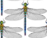 Dragonflycombo3_thumb