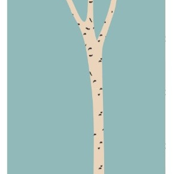 Birch Tree - white background