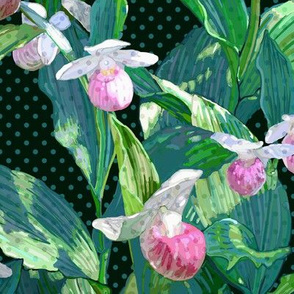Showy Lady Slipper Teal Leaves