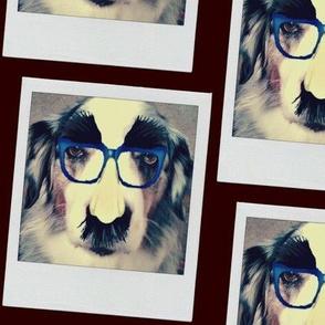 Dog Geek