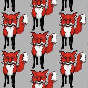 Fox on Gray