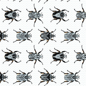 Medium Goliath Beetles - sideways