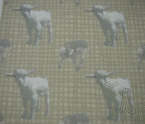 Pigmy goat babies - tan