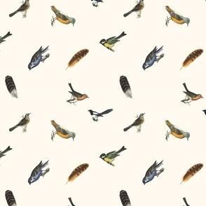 Birds Men...