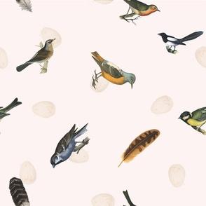 Birds on ...