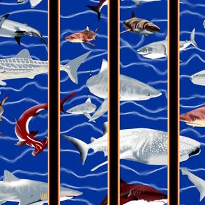 Shark Aquarium 1.