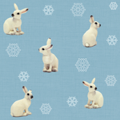Snowshoe Hare, Polar Blue