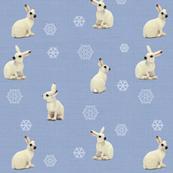 Snowshoe Hare, Smokey Lilac