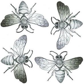 Bees of Jupiter in Black