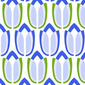 tulipa11