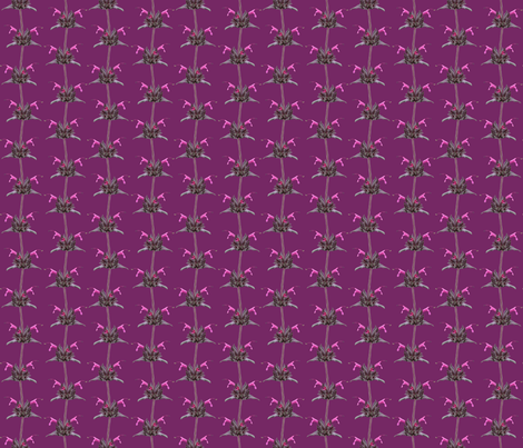 Hummingbird Sage-Natural Colors on Magenta Pink