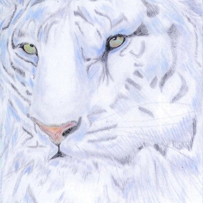 white_tiger_001