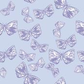 Moth in Lavender