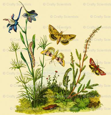 butterflygrub