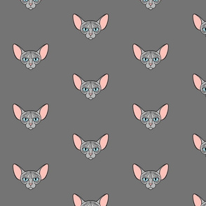 Grey Sphynx Cat Scattered