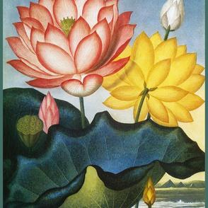 water flowers 1