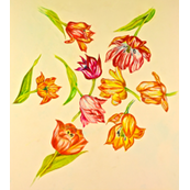 Tulips Strewn