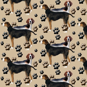 finnish_hound