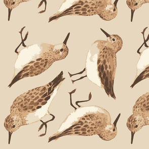Sand piper decals