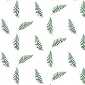 Fern Vintage Botanical
