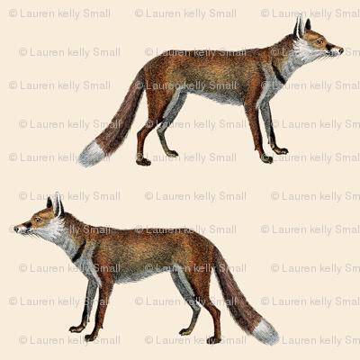 Vintage Fox in Ecru