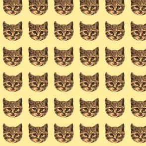 vintage catface