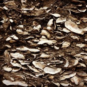 beach house oystershell