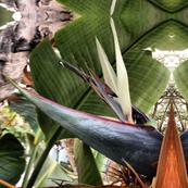tropicaflora