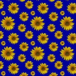 Grandfathers_Sunflowers_Blue