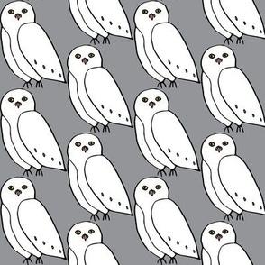 snowy owl in gray