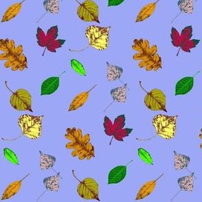Floating Leaves 3