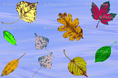 Floating Leaves 2