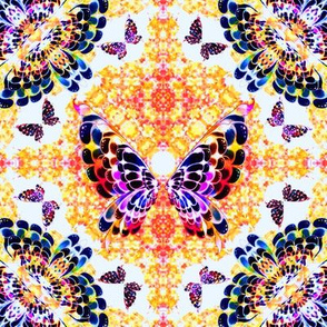 62_Multibright_Butterflies_pt1