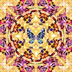 103__Multibright_Butterflies_pt1