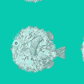 One_Blowfish_on_Teal