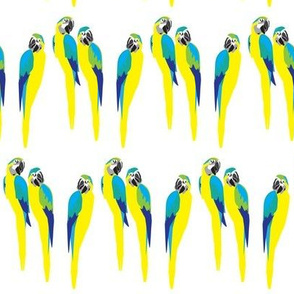 Bright parrot print