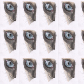 Siamese Cats Eye