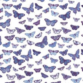 Flutter, Butterflies Indigo
