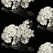 Luscious Oversized Roses