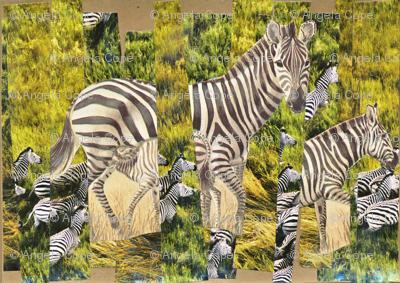 Zebra_preview