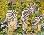 Zebra_thumb