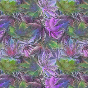 Purple Indica 420 Leaves