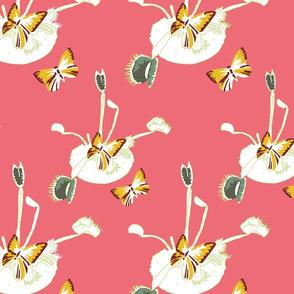 Pink Venus Flutterby