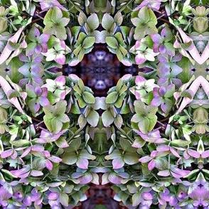 Hydrangea Kaleidoscope
