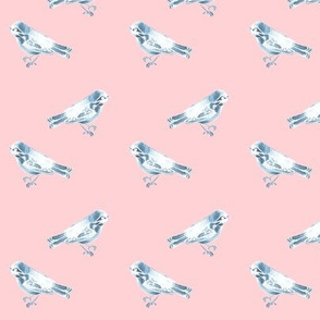 Songbird, Soft Blue on Pink