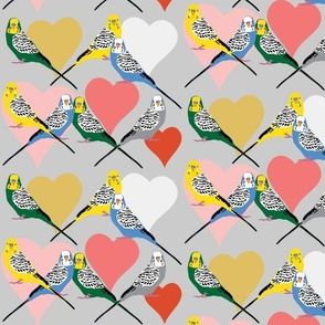 Love Budgies - 5