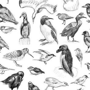 Manx Fauna - Birds