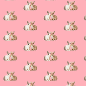 Bunnies in Love on Pink